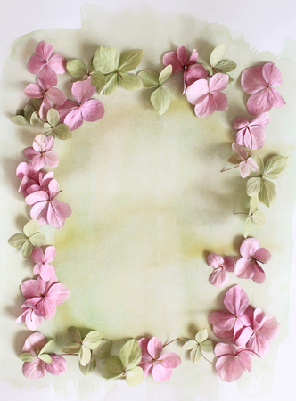 flower petal: Subtle artistic floral backgrodund with hortensia flowers