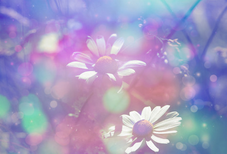 glimmering: Beautiful artistic background with meadow of daisies in dreamy colors with bokeh lights