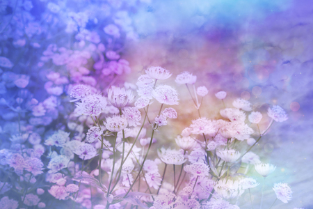 Dreamy beautiful floral background with bokeh lights Stock Photo