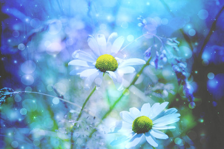Beautiful artistic background with meadow of daisies in dreamy colors with bokeh lights