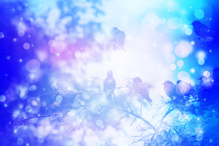 winter scene: Dreamy winter scene with starling birds sittin on the tree branches in the garden Stock Photo