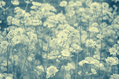 dreamy: Dreamy beautiful background with meadow of flowers