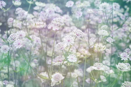 flowers bokeh: Dreamy beautiful background with meadow of flowers