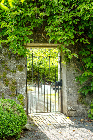 wrought: Beautiful old garden gate covered with green ivy. Stock Photo