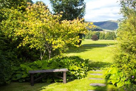 garden bench: Wooden garden bench with green grass