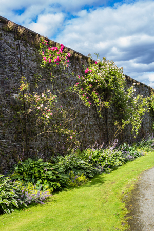 walled: Beautiful walled garden with climbing roses