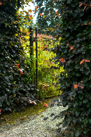 garden gate: Beautiful old garden gate with hedges Stock Photo
