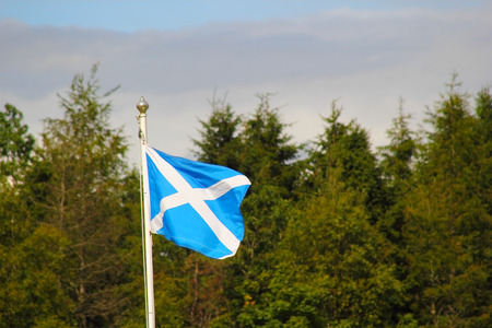 the jacobite: Flag of Scotland against tree background