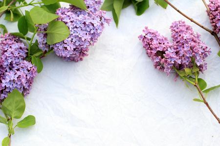 subtle background: Fresh, romantic lilac branches on white subtle background Stock Photo