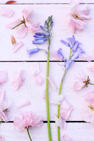 bluebells: Beautiful, romantic background with pink cherry blossom and bluebells Stock Photo