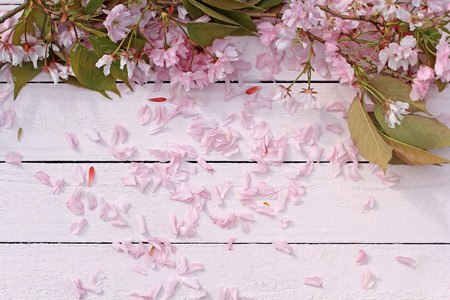 pink floral: Beautiful, Spring floral background with Japanese cherry blooming flowers