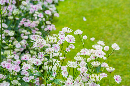 Beautiful, subtle flowers blossom in the garden Stock Photo