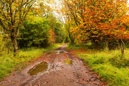 Autumn landscape with trees Reklamní fotografie