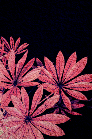 Exotic plants background in pink and black