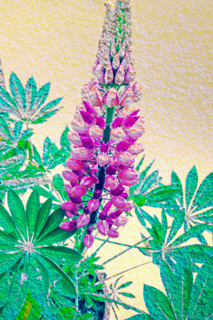 Artistic background with lupin blossom
