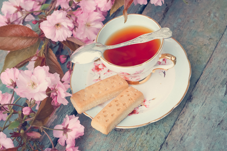 Beautiful, English, vintage teacup with Scottish shortbread and Japanese cherry tree blossoms, close upt