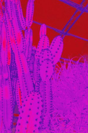 Artistic illustration of huge cactus in red.