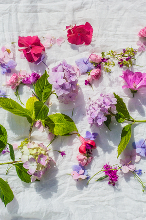 Summer, floral, artistic background with variety of petals and colors