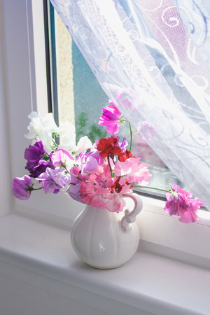 Sweet pea flowers in a vase on the window sill with delicate white curtain, beautiful still life