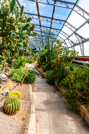 Exotic plants in the greenhouse Banco de Imagens
