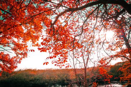 Schöner, herbstlicher Hintergrund mit Baldachin von Blättern und Zweigen Standard-Bild - 107323780