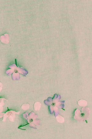 Delicate white flowers on fabric background, close up
