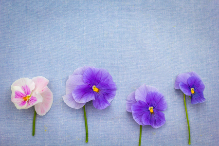 Romantic blue pansies on blue, fabric background