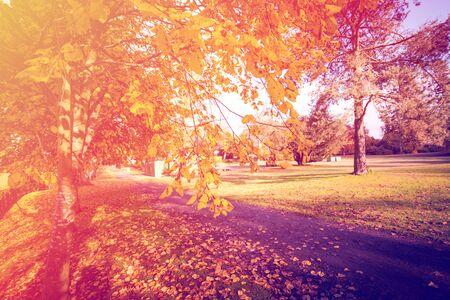 Otoño en Escocia. Árboles de oro en un parque