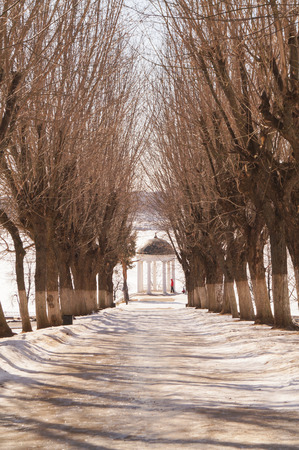 kostroma: Beautiful winter alley with trees without leaves in Kostroma, Russia
