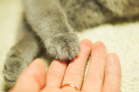pet cat: cats paw in a womans palm. human to lend a helping hand. focus on a edge of cats paw