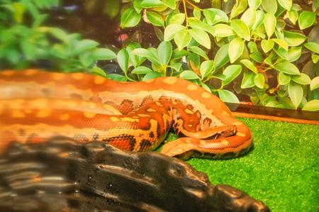brown python on the grass
