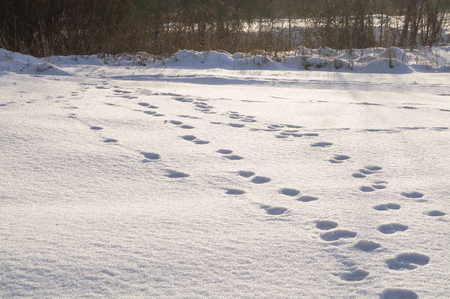 dint: Footprints in the snow Stock Photo