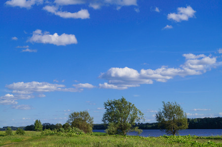 Blue sky and beautiful cloud with meadow tree. Plain landscape background