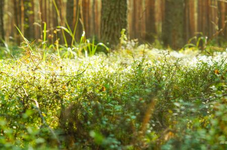 Sunlight in the green forest, summer time Stockfoto