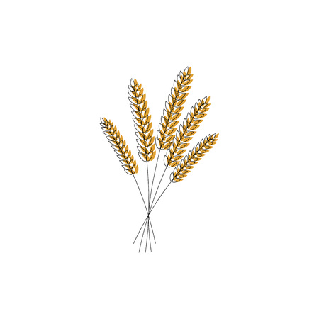 vector illustration of wheat, rye or barley ears with whole grain,wheat, rye or barley crop harvest symbol or icon isolated on white background. Çizim