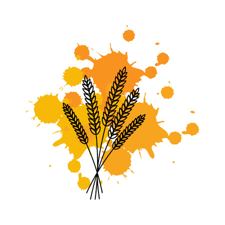 Bunch of wheat ears on ink spots.Vector illustration.Line. Illustration