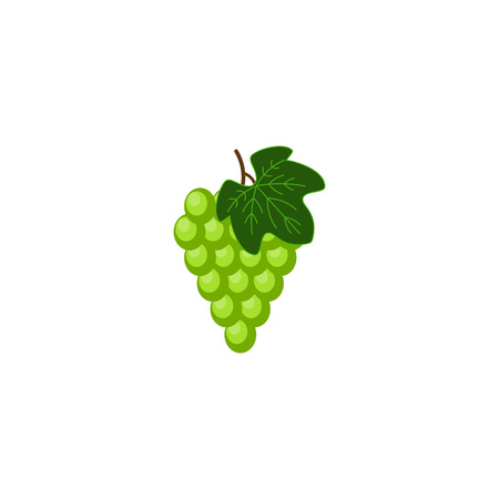 Fresh bunch of grape icon on white background. vector illustration in flat style. Bright colorful grape. Sauvignon blan