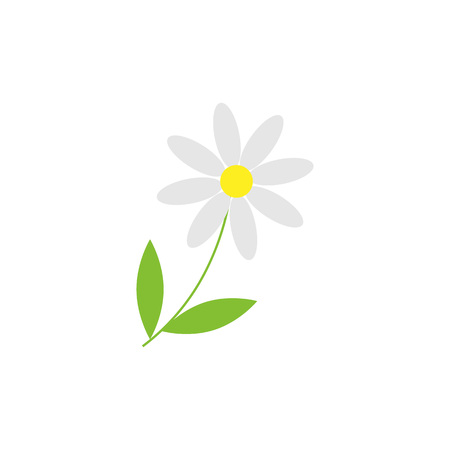 Daisy camomile flower isolated object. Vector illustration