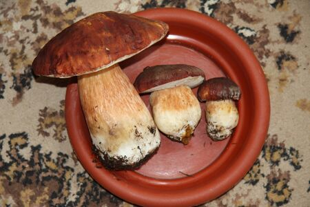 Boletus edulis edible mushroom on the plate on the table