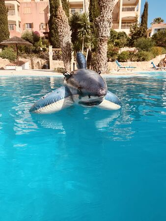 pool toy shark inflatable in swimming poo