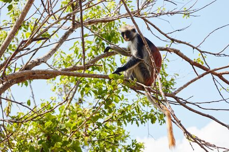 monkey sitting on a tree branch watching left