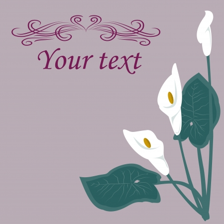 White lilies on a gray background.  Basic elements are grouped. Vector