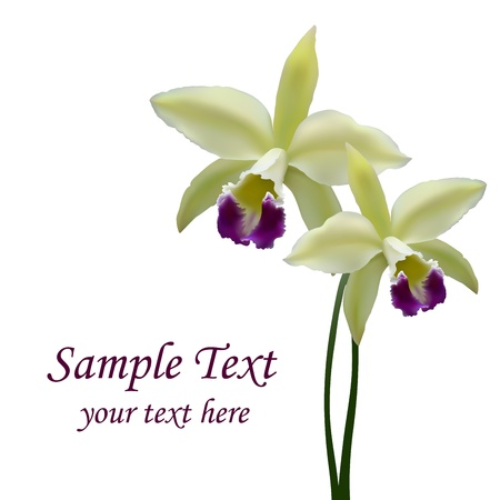 Photorealistic illustration - a beautiful yellow orchid. Created with meshes. Floral background. Vector