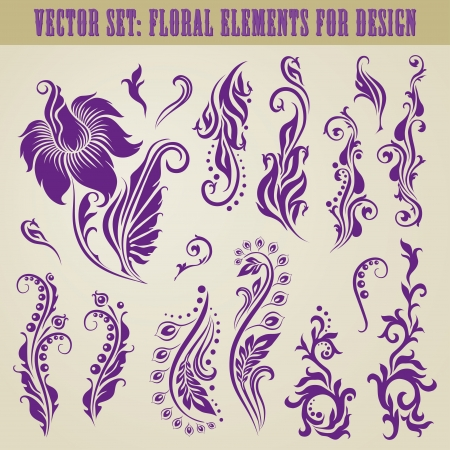 flowery: Vector set of decorative elements for design  Floral vintage collection  Illustration
