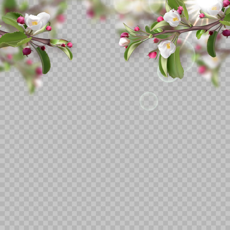 Set of realistic flowering branches. 3d green leafs, fresh flowers, petals, sunlights on transparent background. Vector illustration for design of site, web banner, ads, booklet, poster, card, flyer.
