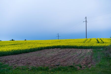 landscape of yellow rapeseed fields in flower with power lines and utility poles in background Imagens - 131855633
