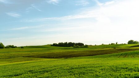 Landscape of green fields, blue sky in Lithuania 版權商用圖片