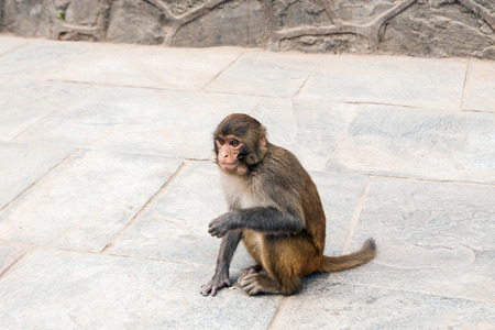 pauper: monkey sitting on the pavement Stock Photo