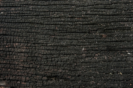 burnt wood: wood texture dark black
