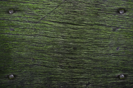 surmounted: nails in wood with fake moss